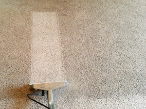 carpet cleaners eldon