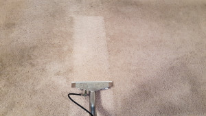carpet cleaning lake ozark MO