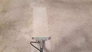 carpet cleaning lake ozark MO